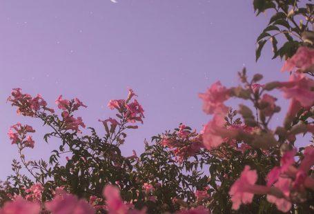 The sky just begun to darken, and the flowers were in full bloom #flowerwallpaper #flowerphotography