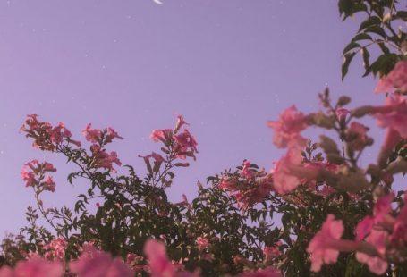 Flower under night sky - #background #Flower #Nigh... - #background #flower -
