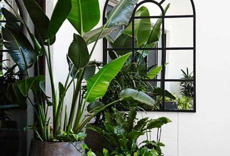 Gorg oversized plants!