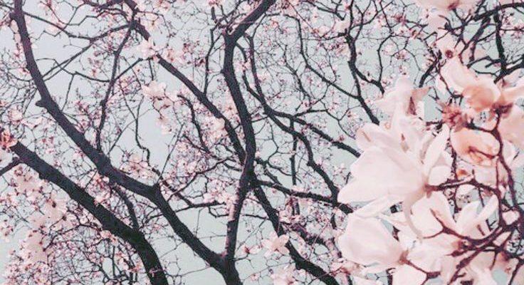 Kostenlose Handy Hintergrundbilder - Februar Edition - Dizzybrunette - #Dizzybrunette #Edition #Februar #halloweenaesthetic