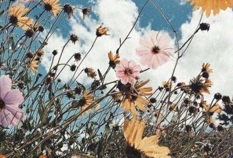 Motivation pinterest  m m   Hintergründe    Blumen   back f #blumen #hintergrunde #interesse #pinterest