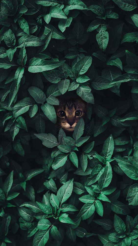 8 typische Dinge, die Katzenbesitzer tun können, um das Herz und den Geist einer Katze zu brechen…