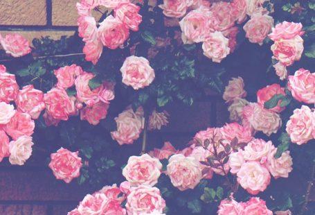 24 Pretty Photo of Scrapbook Aesthetic Wallpaper . Scrapbook Aesthetic Wallpaper Flowers Outside My Windowscrapbooking Picturesque Pinterest