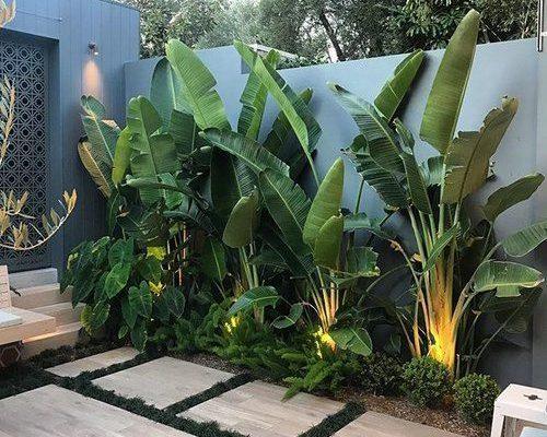 Tropical vibes 🌴🌱 . . #ard#bettergardenbiggerlife #cityscaper Install @mahonygroup
