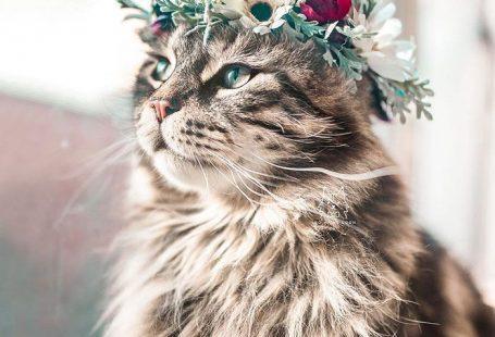Flower Crown Cat Dog