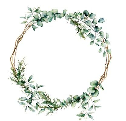 Watercolor eucalyptus branch wreath. Hand painted eucalyptus branch and leaves isolated on white background. Floral illustration for design, print, fabric or background