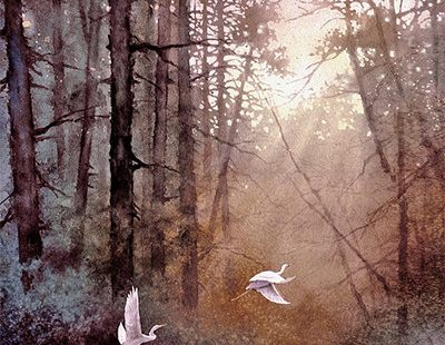 Wildlife Art Print van aquarel - vogels, zilverreigers, bomen, Lake, Sunrise