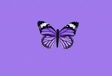 #butterfly #cutewallapaper #trendy #iphonebackground - #butterfly