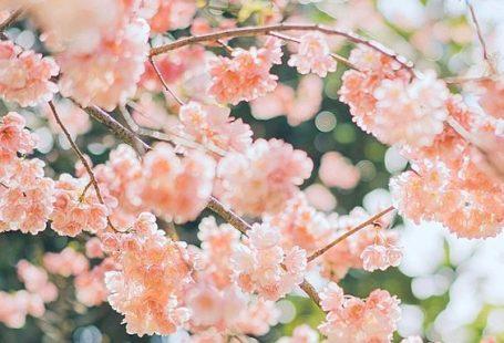 rosa Blumen #beautifulflowerswallpapers #beautifulflowerswallpapers #blumen